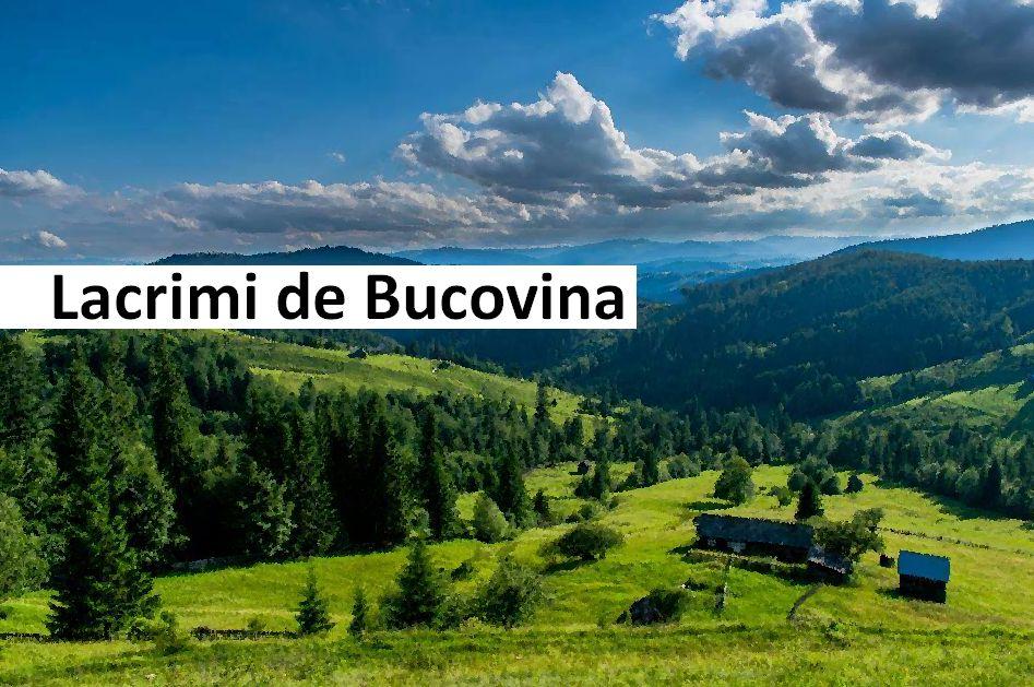 """Lacrimi de Bucovina"" – Tabara Internationala de Pictura sub egida UNESCO"